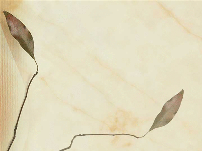 Predloga načrta s sliko stisnjenih listov