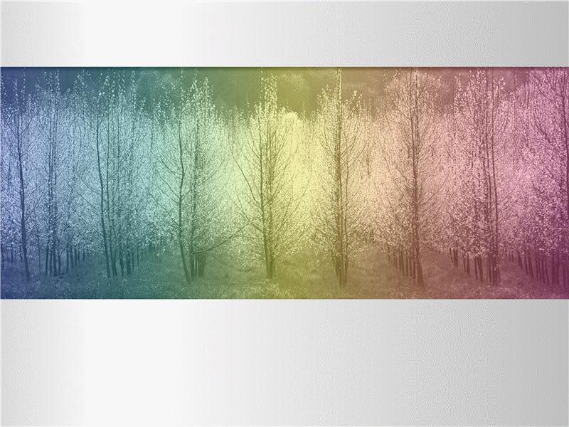 Birden çok renk tonlu ağaçların bulunduğu resim
