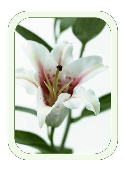 Листівка до Великодня (з лілеєю)