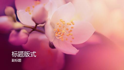 樱花自然主题演示文稿(宽屏)