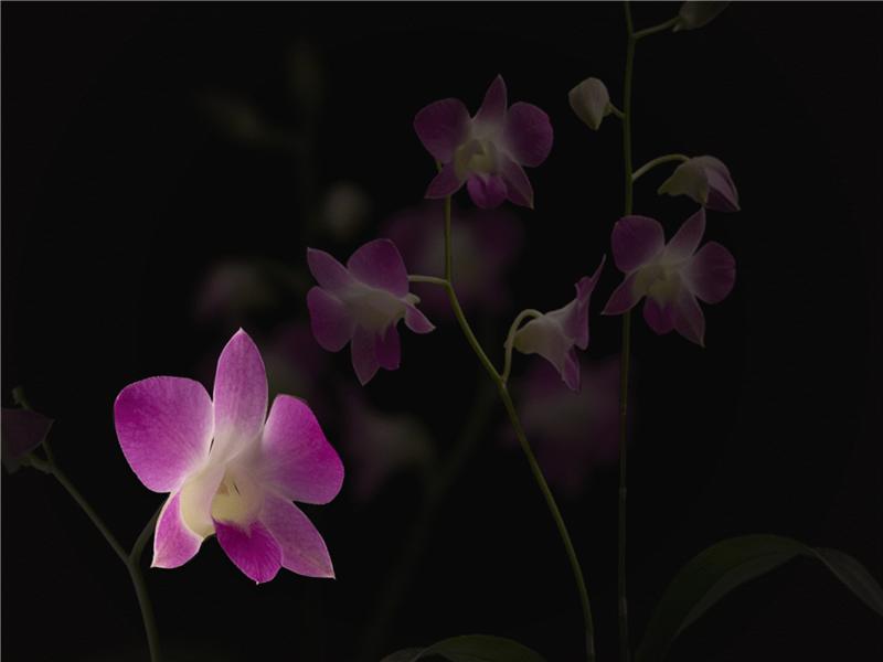 动画飘动花瓣