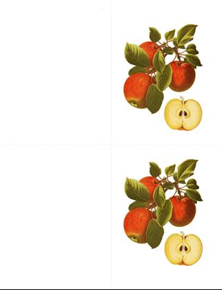 植物贺卡(10 张,每页 2 张)