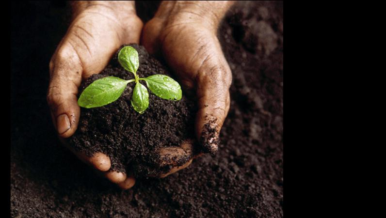 植物幼苗图像幻灯片